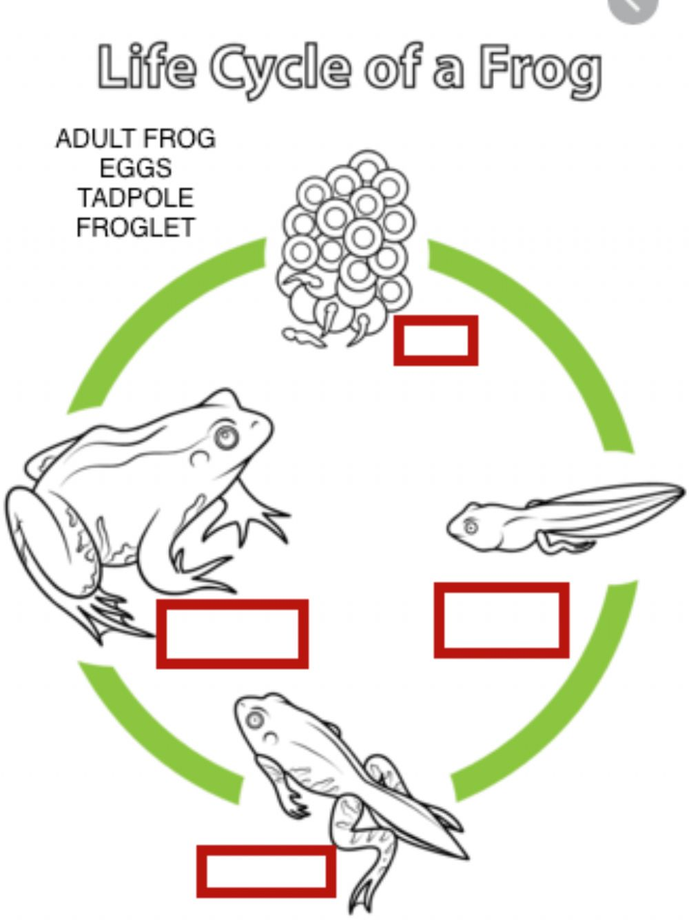 hight resolution of Life cycle of a frog activity