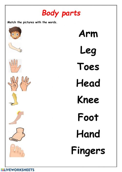 small resolution of Body parts activity for 1