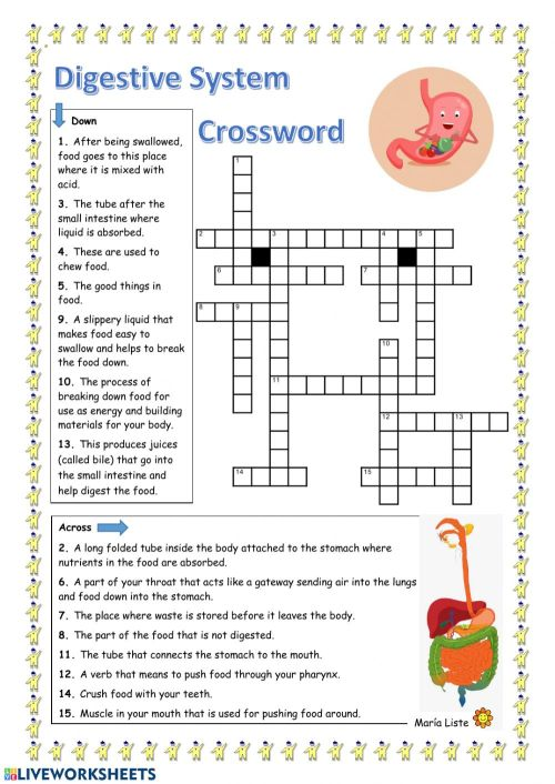 small resolution of Digestive System Crossword worksheet