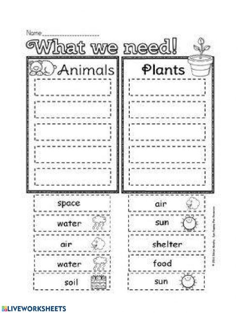 small resolution of Animal plants and need worksheet