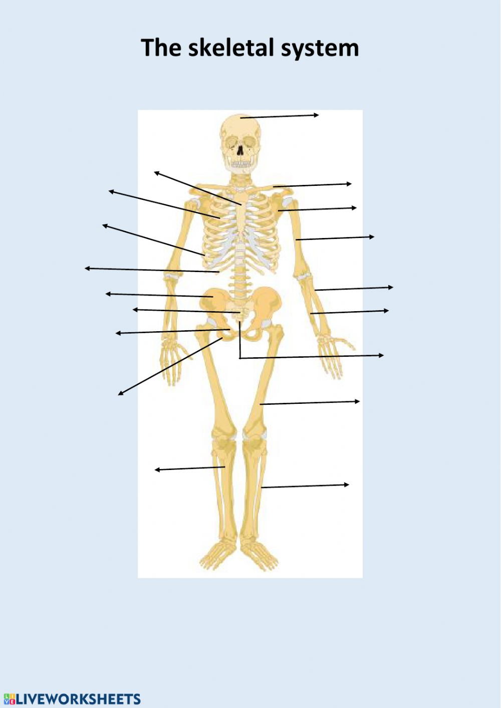 medium resolution of The skeletal system interactive worksheet