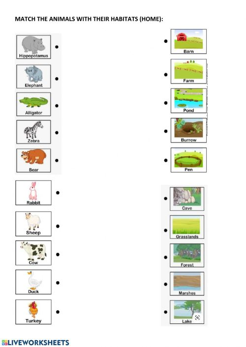 small resolution of Animal habitats and home worksheet