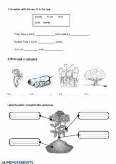 Worksheets by Satur_Pinillos