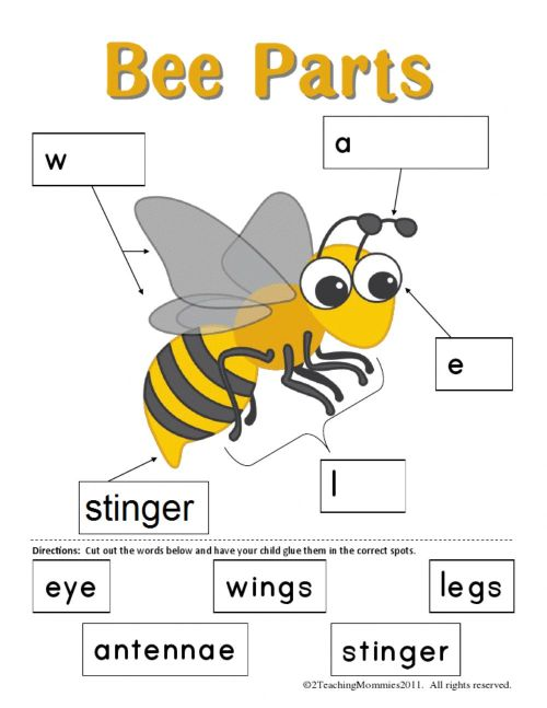 small resolution of Bee body parts worksheet