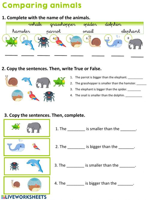 small resolution of Comparing animals worksheet