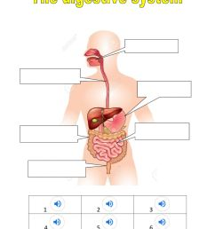 The digestive system exercise [ 1413 x 1000 Pixel ]