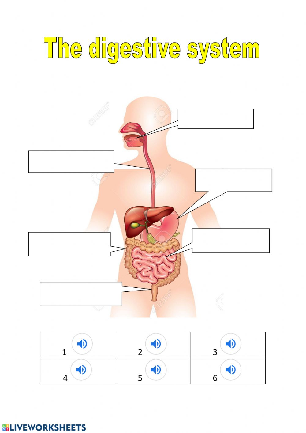 hight resolution of The digestive system exercise
