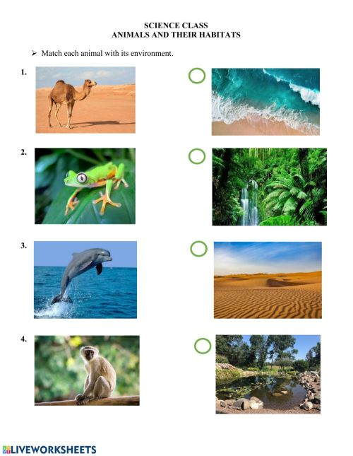 small resolution of Animals and their habitats worksheet