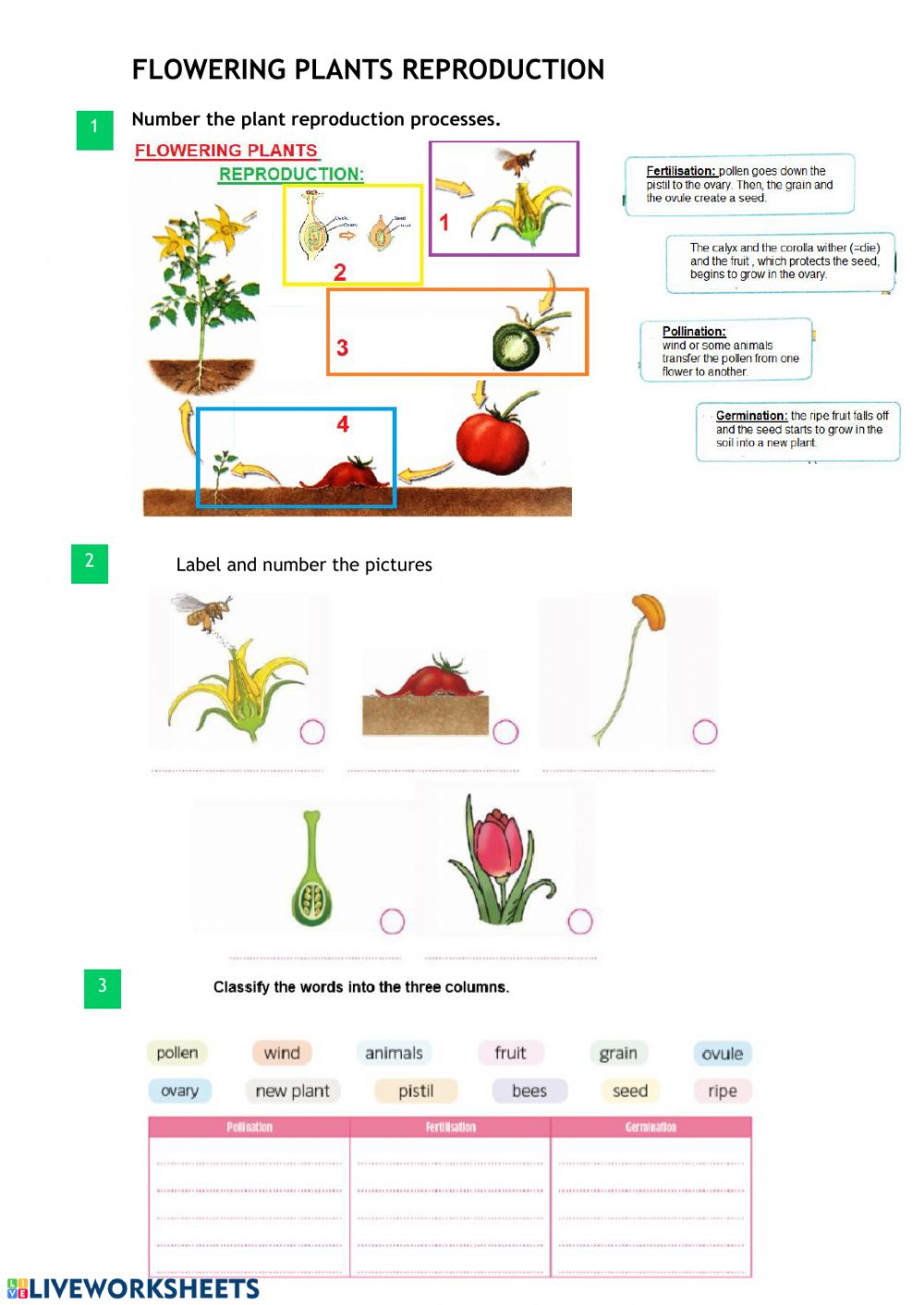 hight resolution of Flowering plants reproduction worksheet