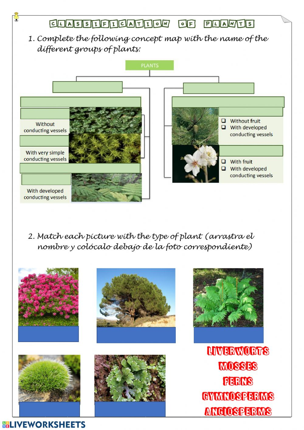 hight resolution of Classification of plants interactive worksheet