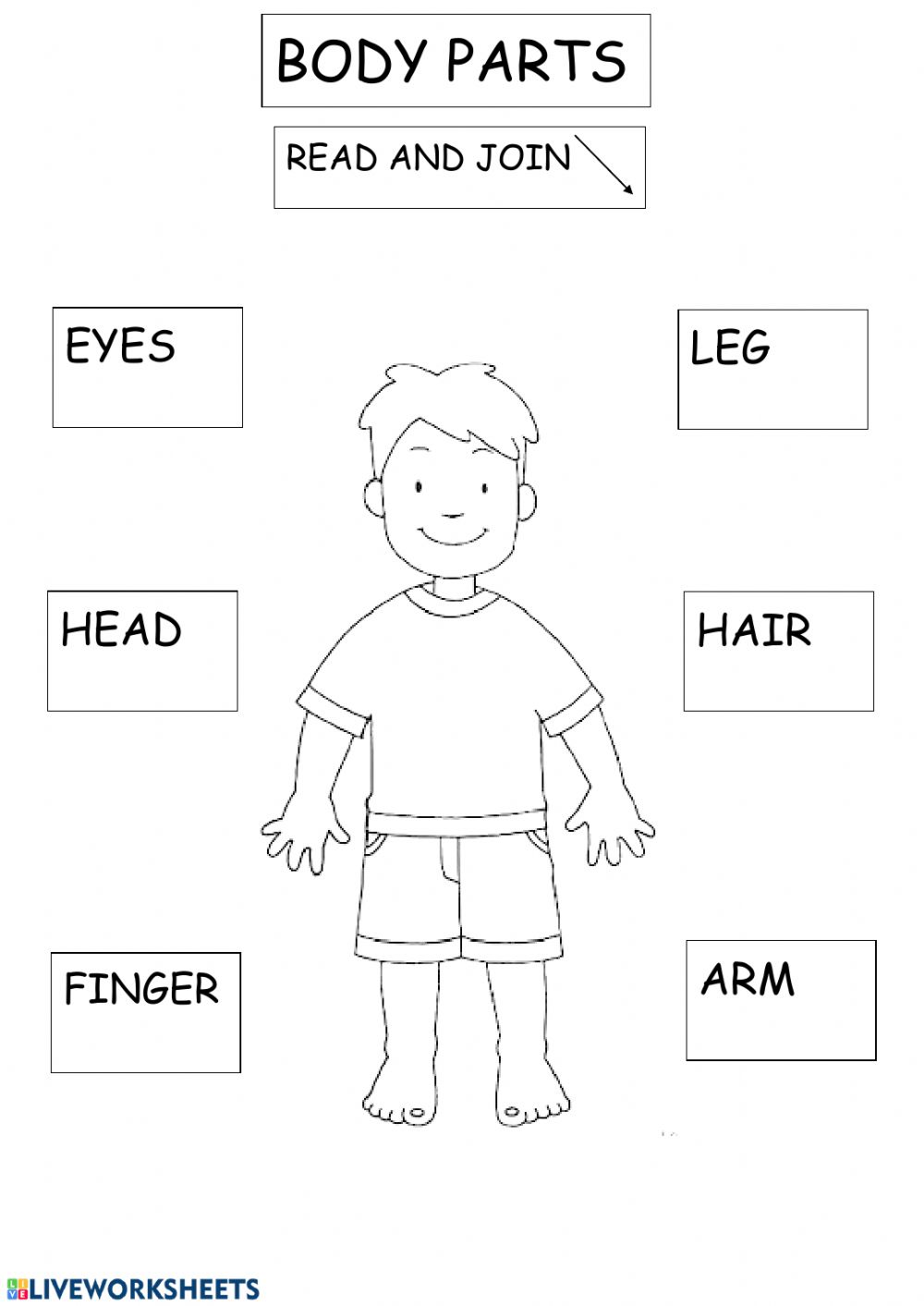 hight resolution of Body parts exercise for 2ND GRADE