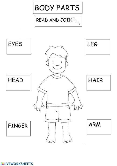small resolution of Body parts exercise for 2ND GRADE