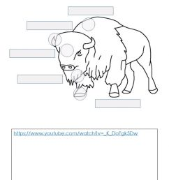How to Draw a Bison - Labeling - Adaptations and Features worksheet [ 1444 x 1000 Pixel ]