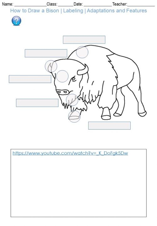 small resolution of How to Draw a Bison - Labeling - Adaptations and Features worksheet