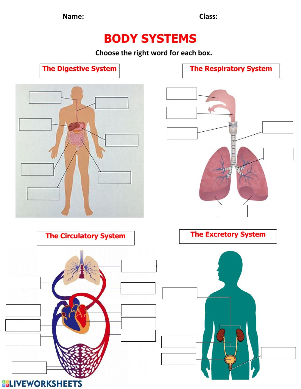 hight resolution of Body Systems activity
