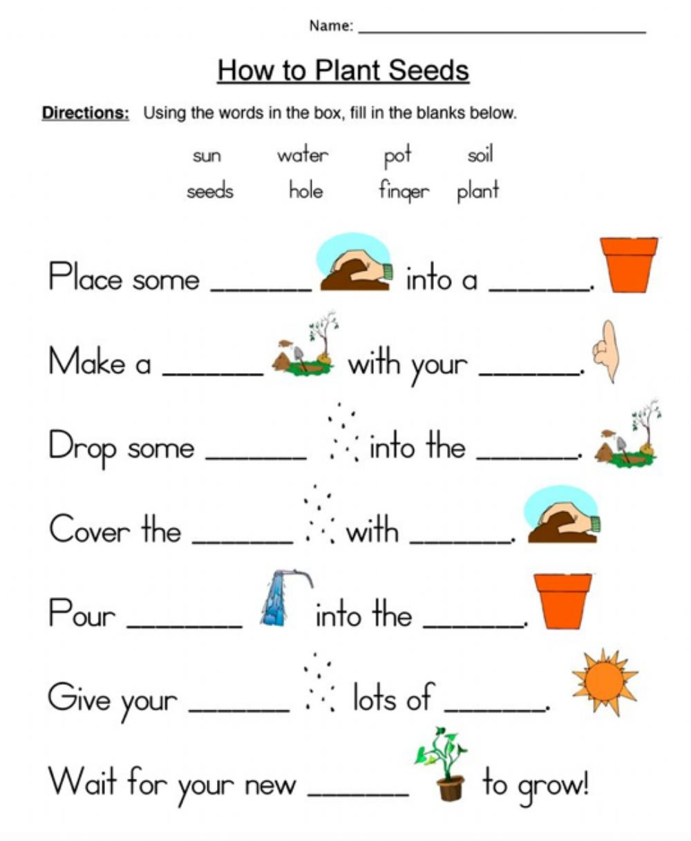 medium resolution of How to Plant Seeds worksheet