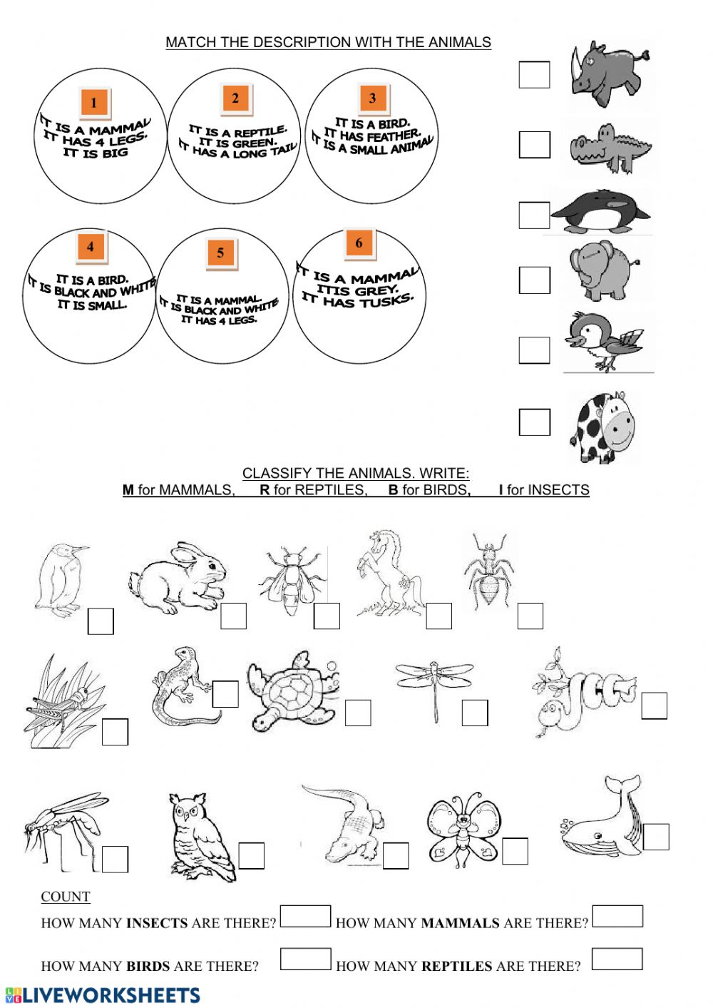 hight resolution of Animals classification exercise