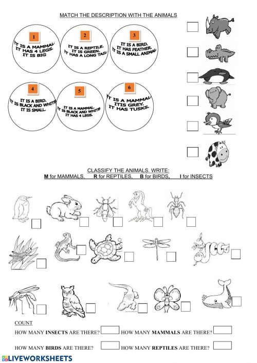 small resolution of Animals classification exercise