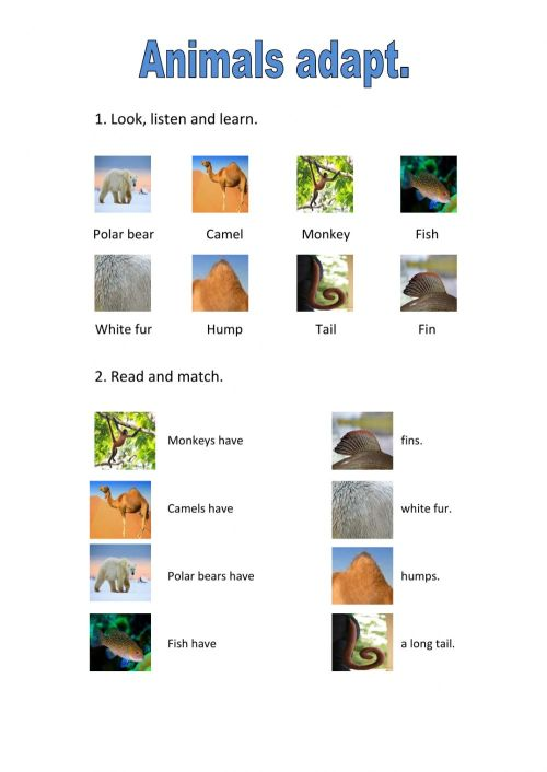 small resolution of Animals adaptations worksheet