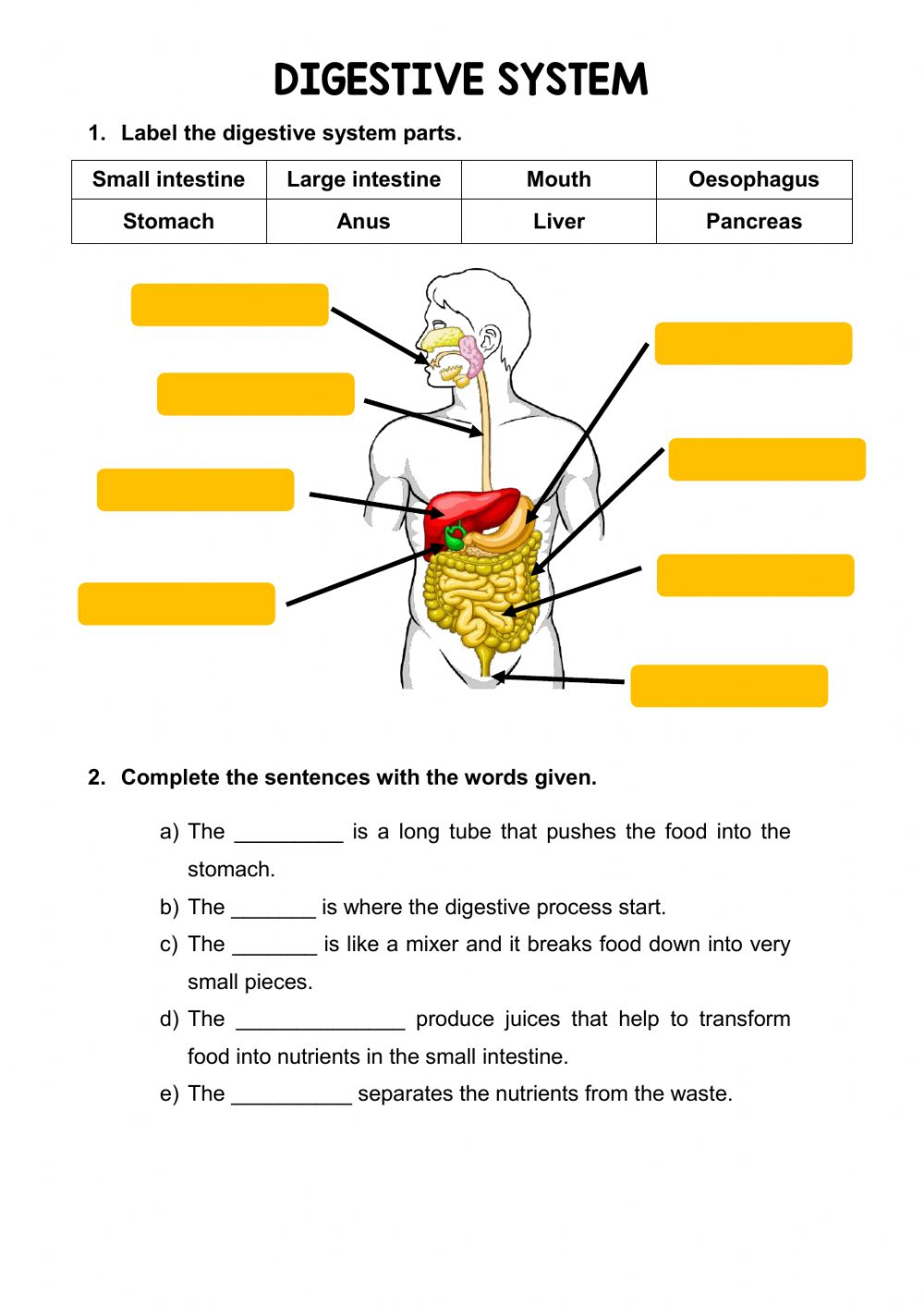 hight resolution of The digestive system online activity