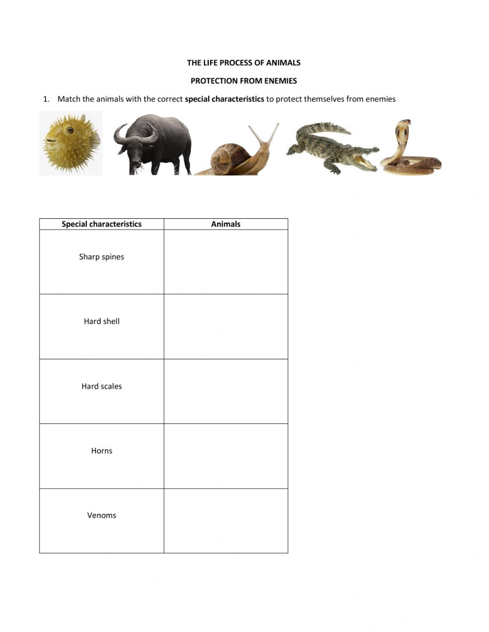 hight resolution of Science Year 5 - Animals worksheet
