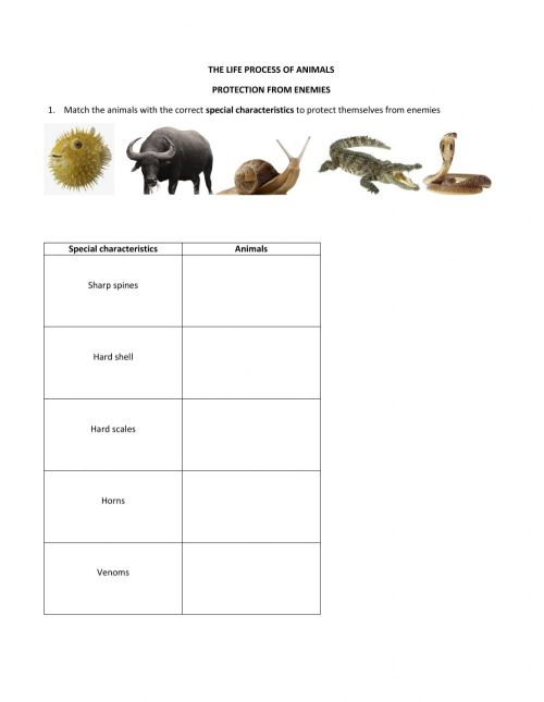 small resolution of Science Year 5 - Animals worksheet