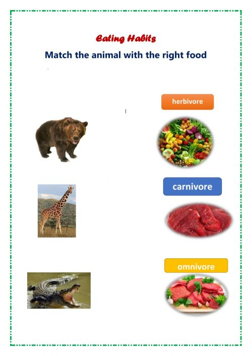 small resolution of Eating habits animals worksheet