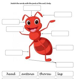 Body of an ant worksheet [ 1413 x 1000 Pixel ]