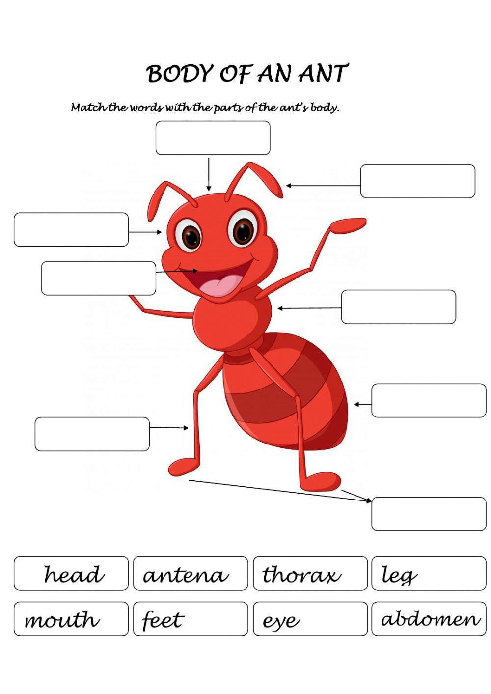 hight resolution of Body of an ant worksheet