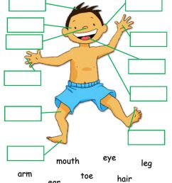 Body Parts online exercise for Grade 2 [ 1413 x 1000 Pixel ]