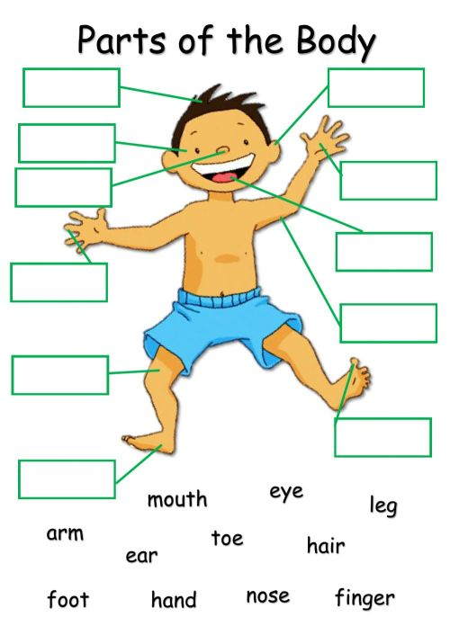 small resolution of Body Parts online exercise for Grade 2