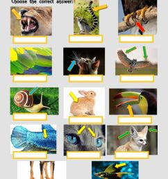 Animals body parts exercise for GRADE 3 [ 1413 x 1000 Pixel ]