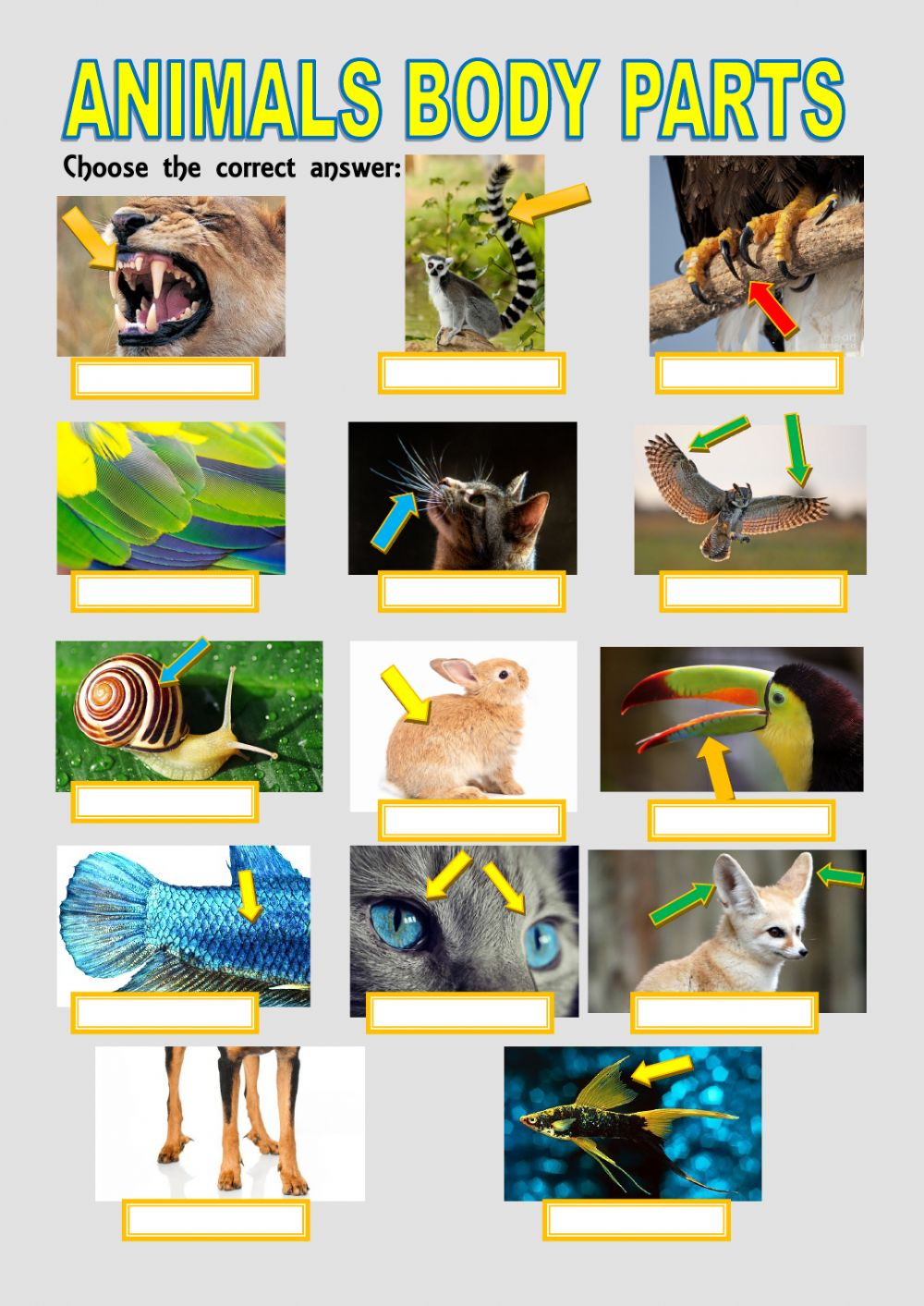 medium resolution of Animals body parts exercise for GRADE 3
