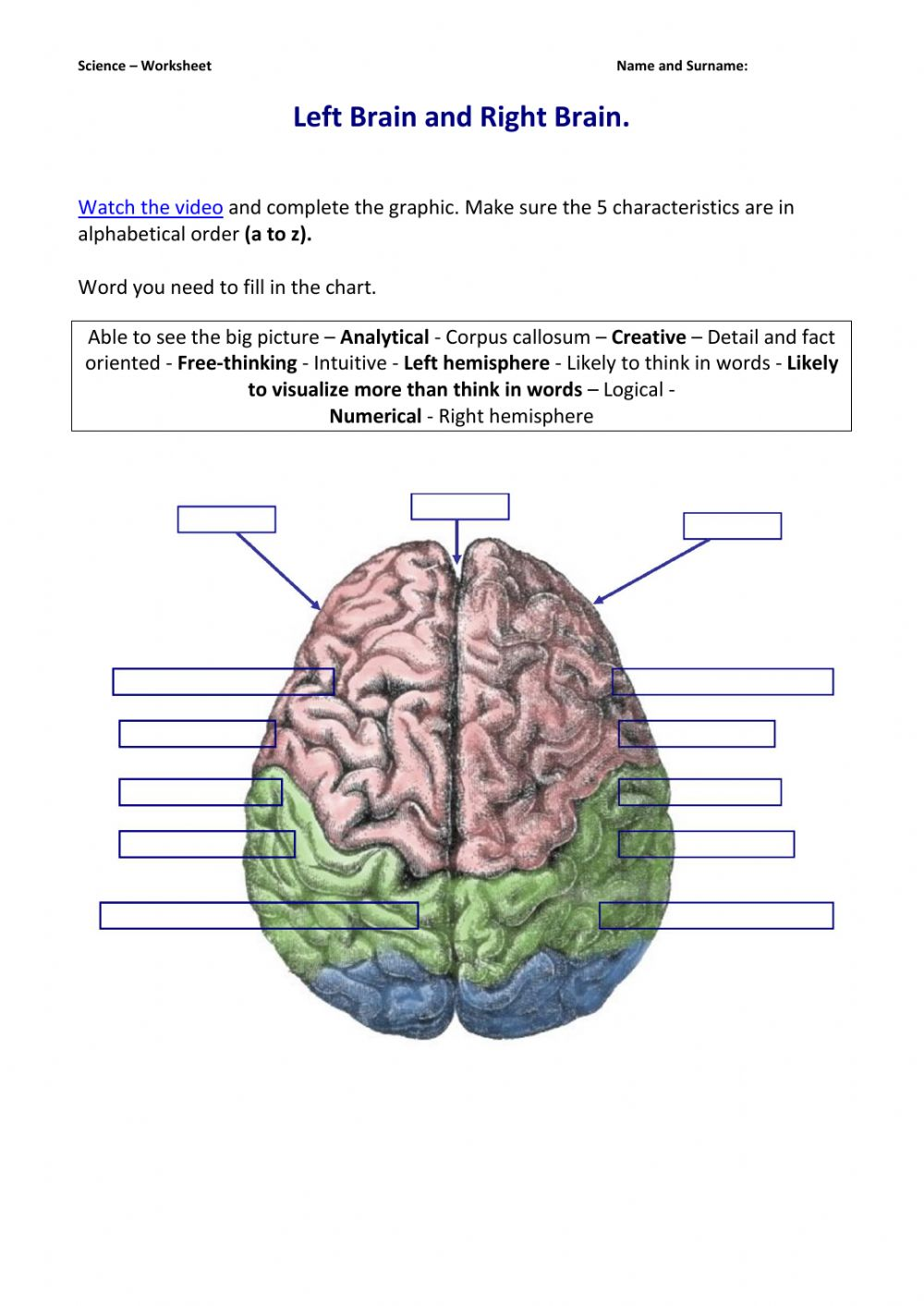 hight resolution of Left Brain and Right Brain. worksheet