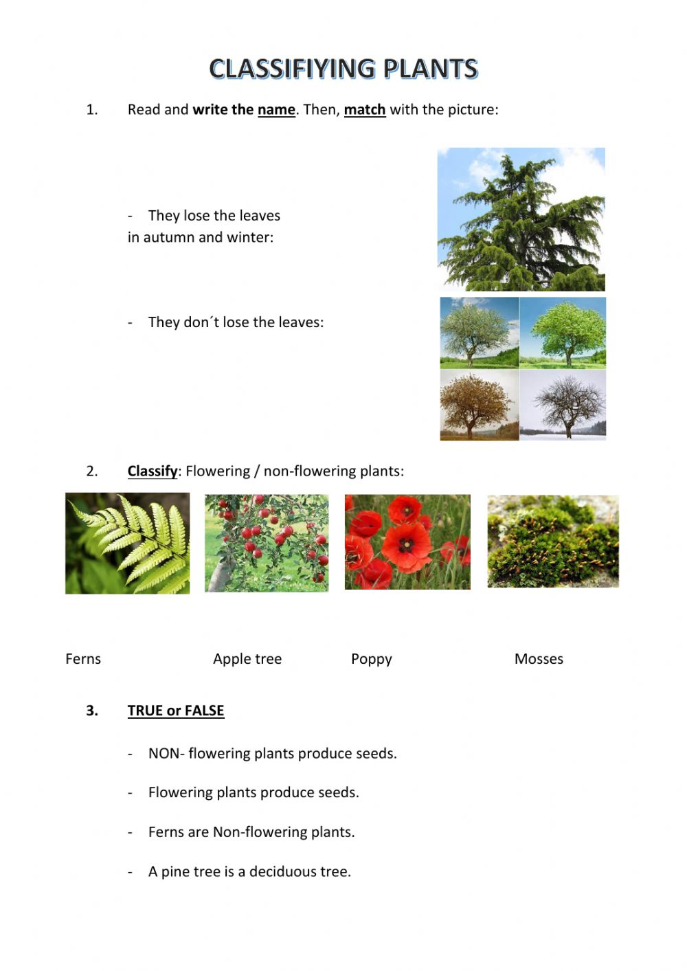hight resolution of Classifying plants interactive worksheet