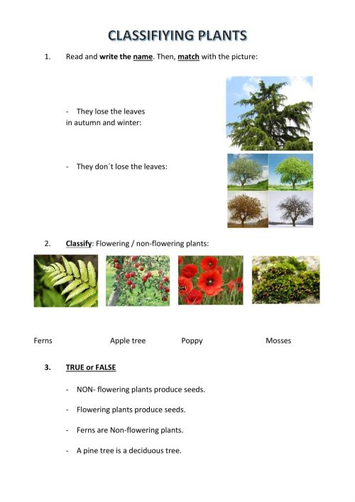 small resolution of Classifying plants interactive worksheet
