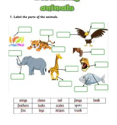 Describing animals interactive activity for GRADES 2 AND 3 [ 1413 x 1000 Pixel ]