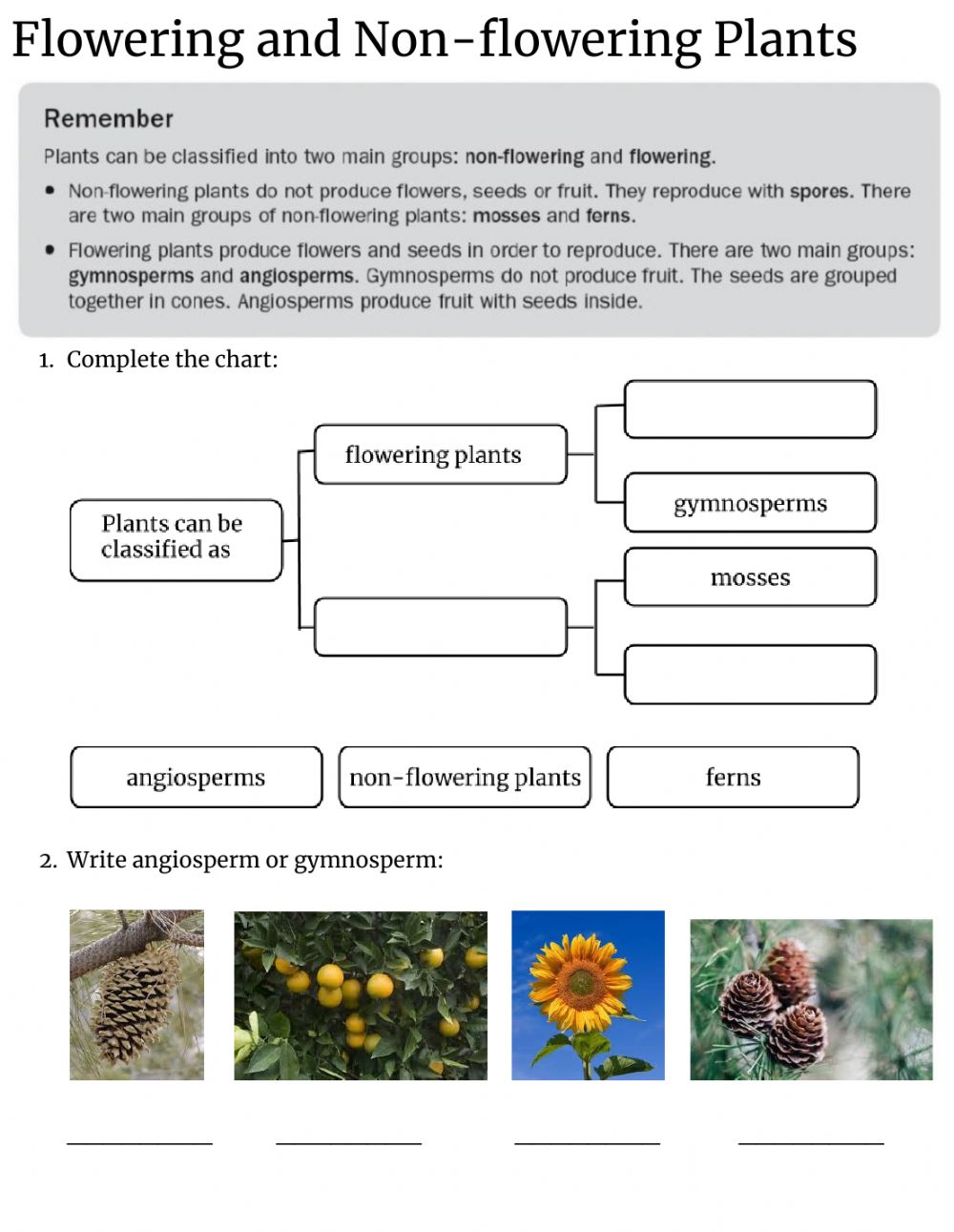 hight resolution of Flowering and Non-flowering plants worksheet