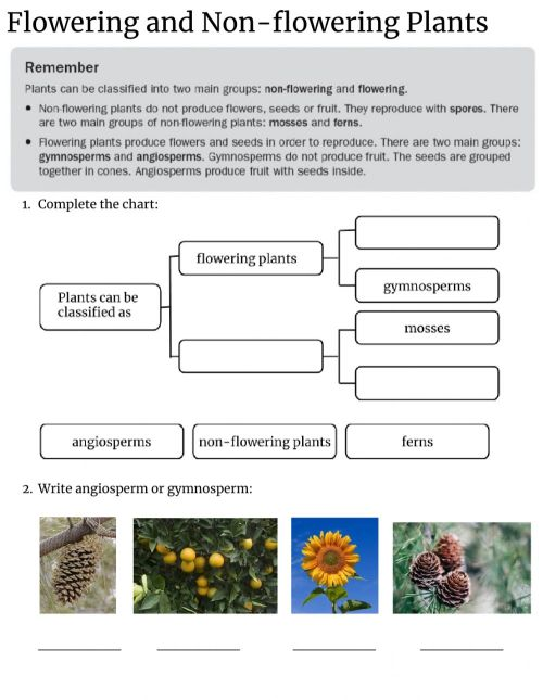 small resolution of Flowering and Non-flowering plants worksheet