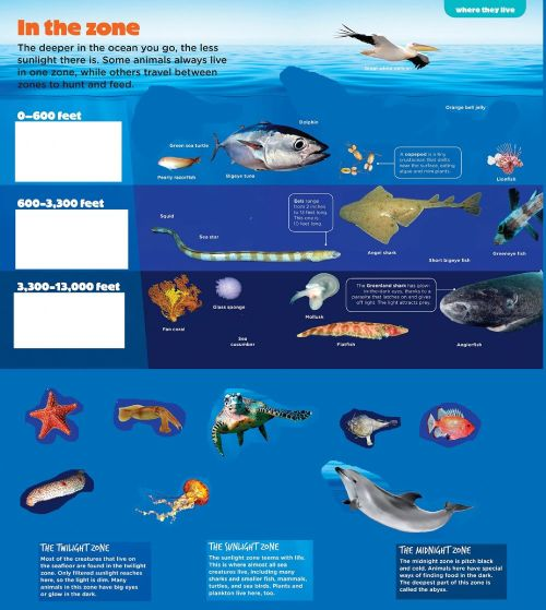 small resolution of Ocean zones and animals worksheet