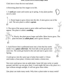 Life Cycle of a flowering plant worksheet [ 1291 x 1000 Pixel ]