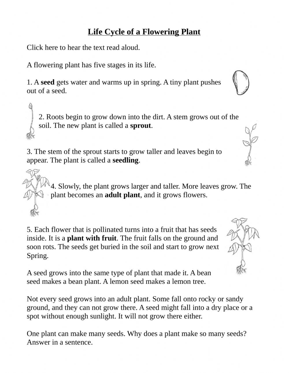 hight resolution of Life Cycle of a flowering plant worksheet