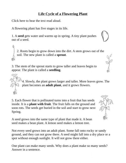 small resolution of Life Cycle of a flowering plant worksheet
