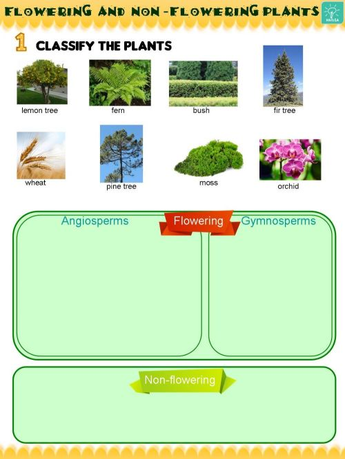 small resolution of Flowering and non-flowering plants interactive worksheet