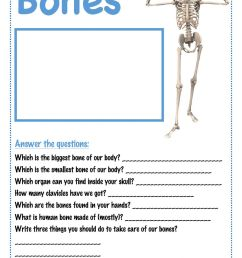 Bones interactive worksheet [ 1413 x 1000 Pixel ]