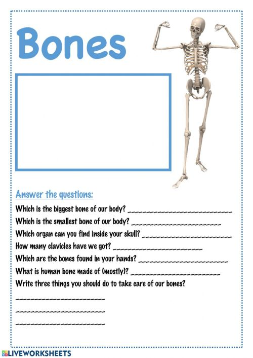 small resolution of Bones interactive worksheet
