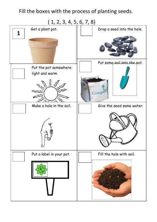small resolution of Plants worksheet for Grade 2