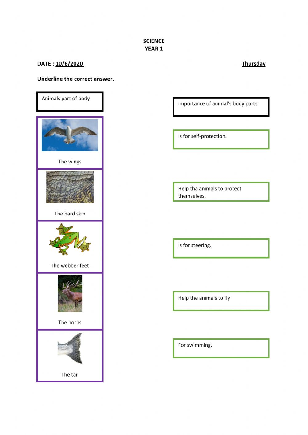 medium resolution of Importance Of Animal's Body Parts worksheet