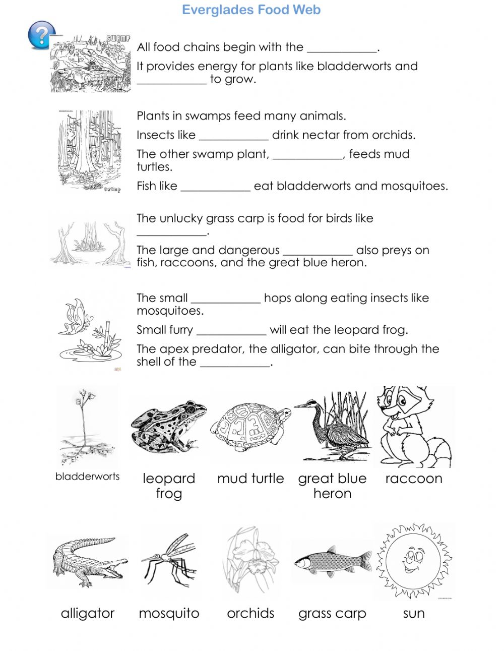 hight resolution of Everglades Food Web - Science Reading worksheet
