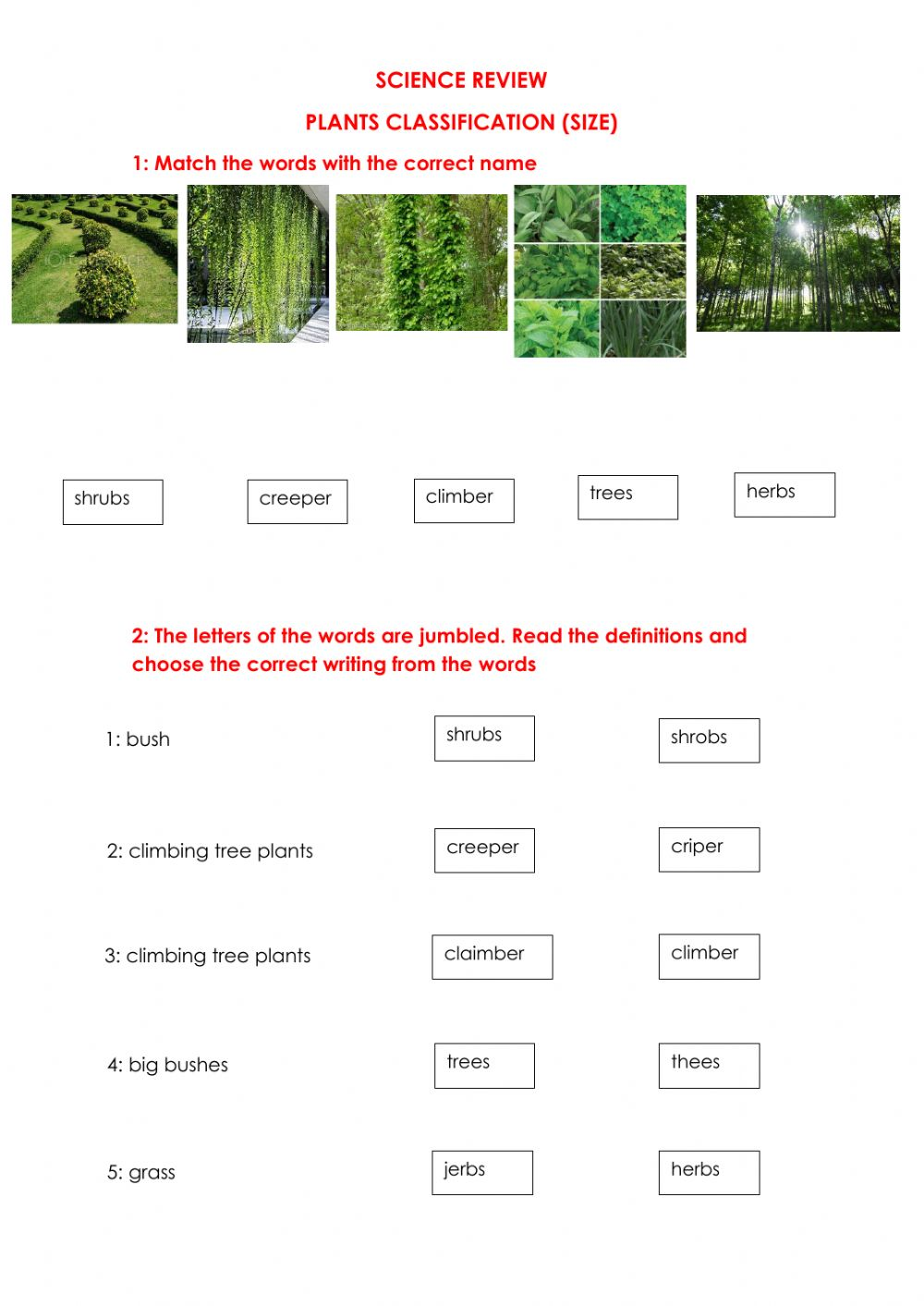 hight resolution of Plants Size Classification worksheet
